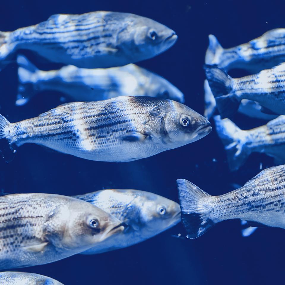 concept2_Seaculture_UMA