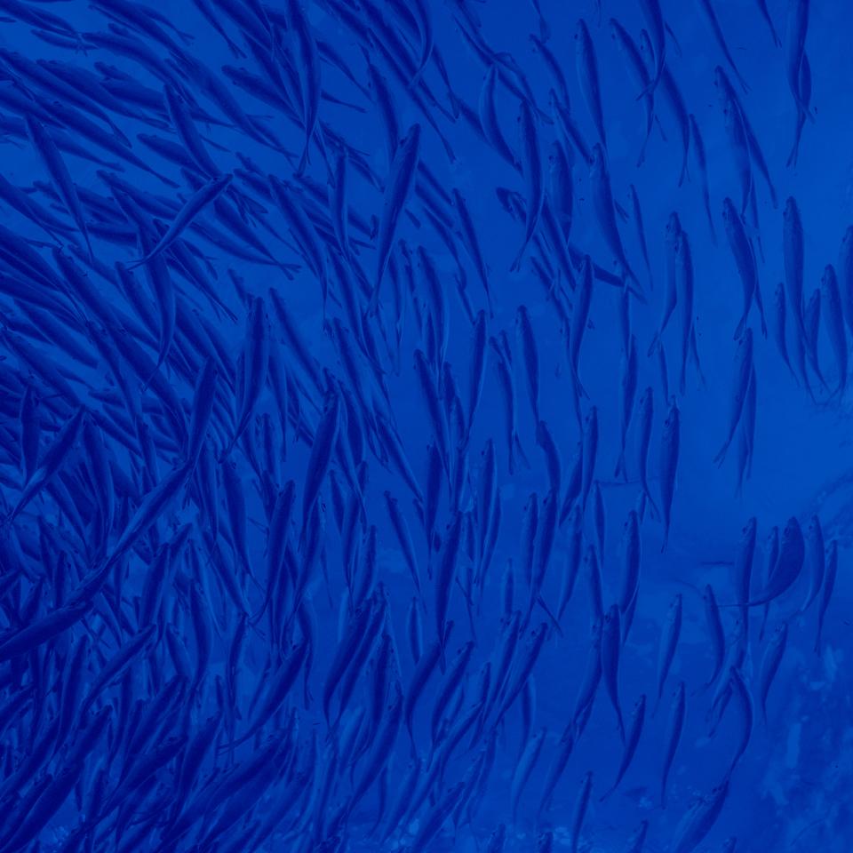 fishes_Seaculture_UMA